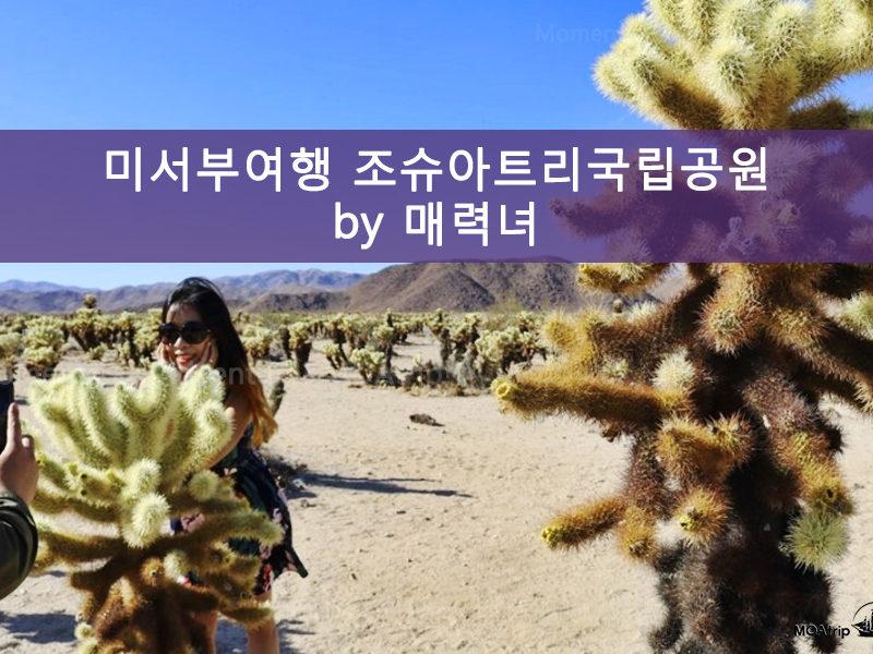 미서부여행 조슈아트리국립공원 투어-매력녀